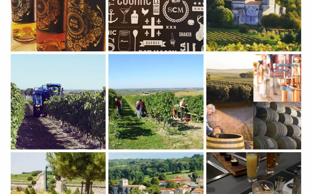 Cognac and its vineyard – Pictures and videos
