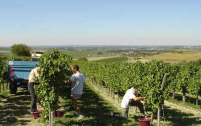 Harvest and Pineau des Charentes workshop