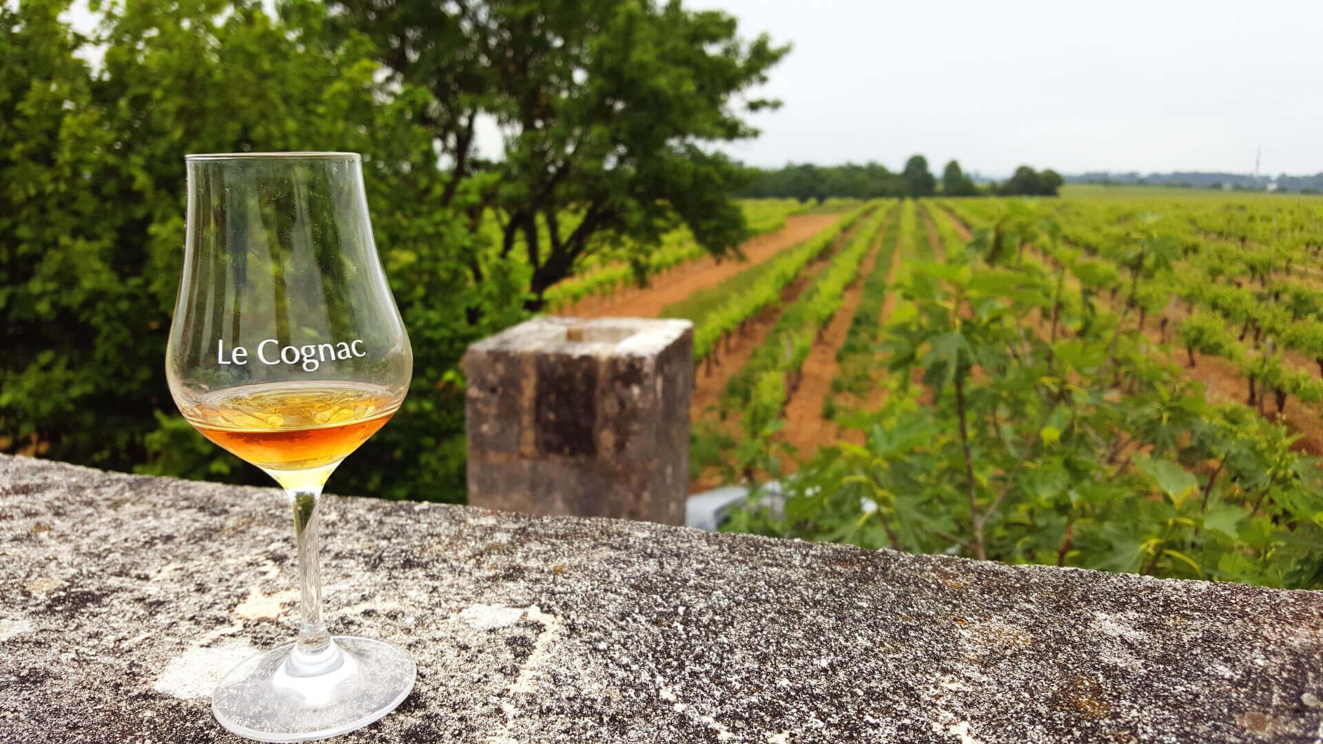 Dégustation de cognac dans les vignes de Grande Champagne