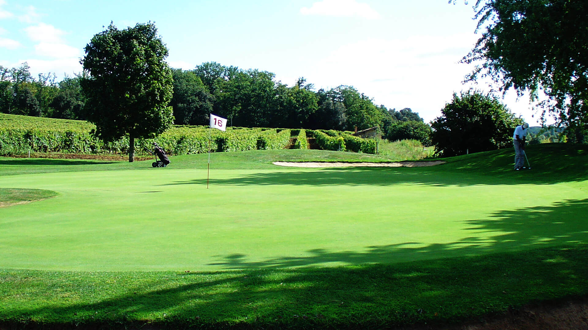 Play golf in the vineyard of Cognac during a stay in a charming guesthouse