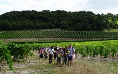 Gourmet walk in Grande Champagne