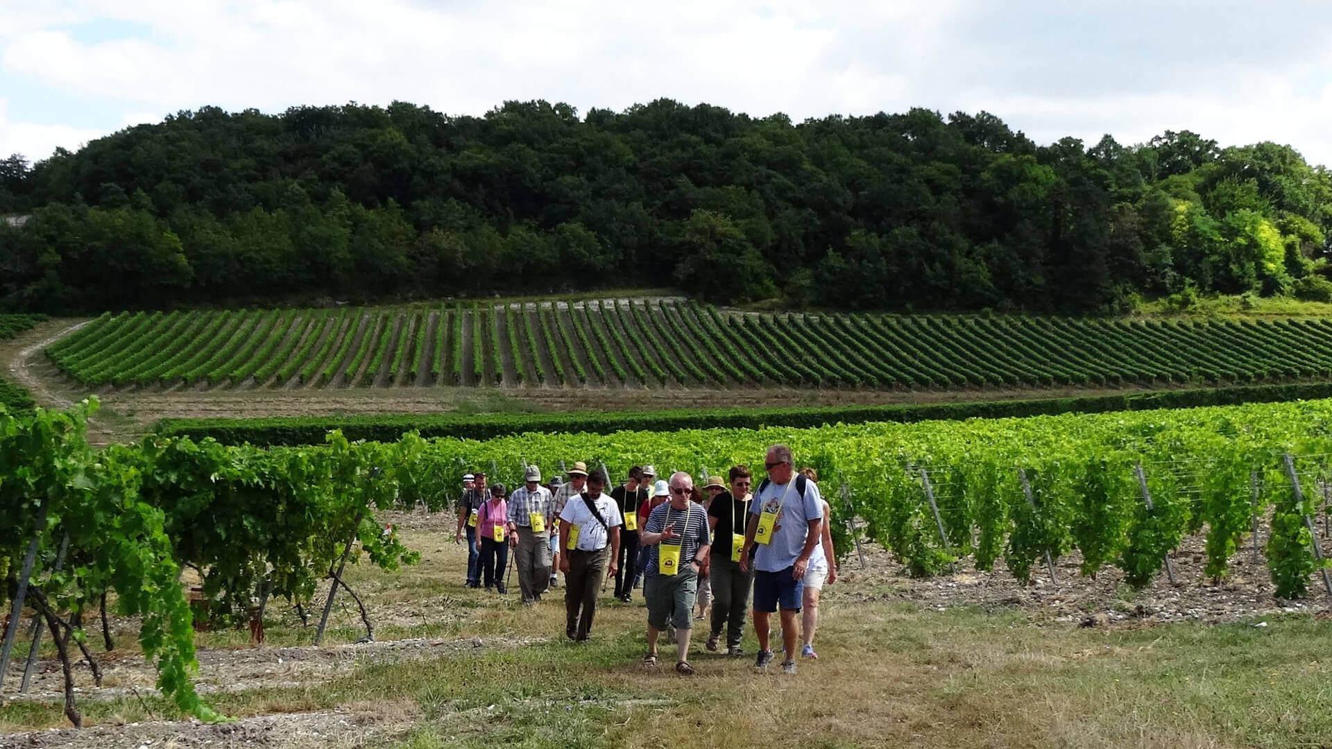 Balade gourmande en Grande Champagne, randonnée pour gastronomes